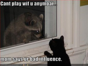 bad influence lolcat