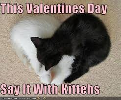 valentines day lolcat