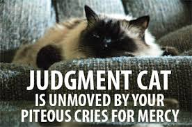judgmentcat