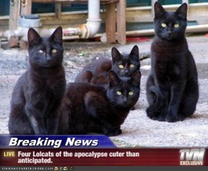 4-lolcats-of-the-apocalypse