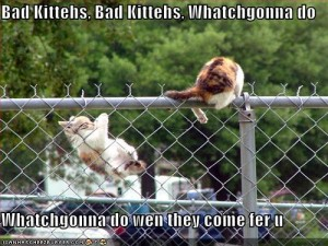 funny-pictures-cats-jumping-fence
