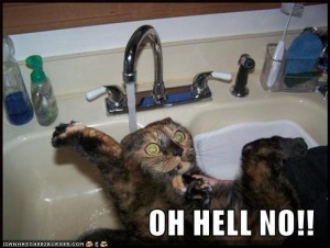 waterlolcat