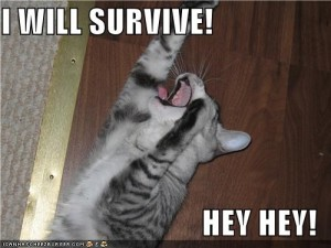 survivelolcat