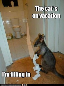 kangaroovacation