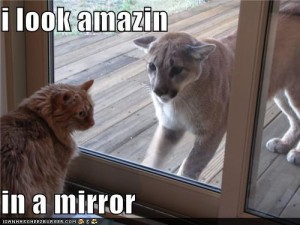 lolcat mirror amazing